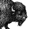 Crosshatch-Bison