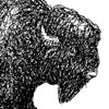 Curly-Bison